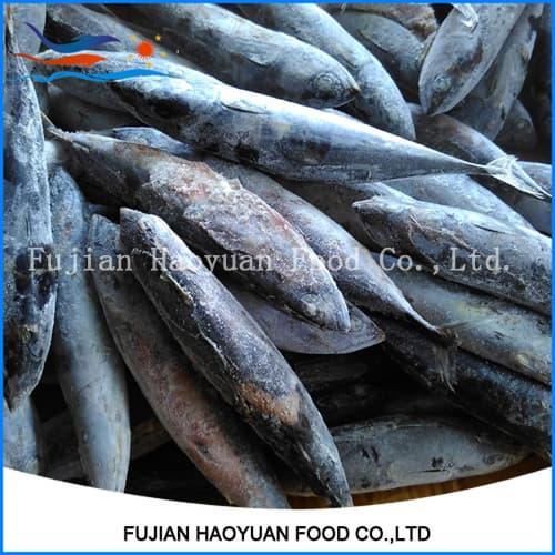 Sea frozen fish skipjack tuna bonito from fujian haoyuan for Best frozen fish