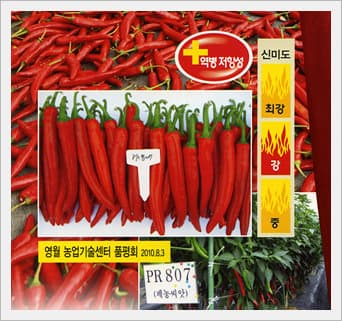 Peppers Seeds -PRJN807-