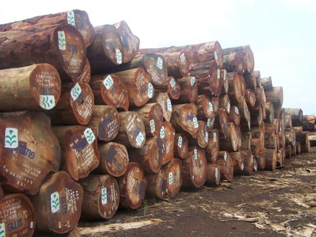 Fresh Cut Tali Logs Tradekorea