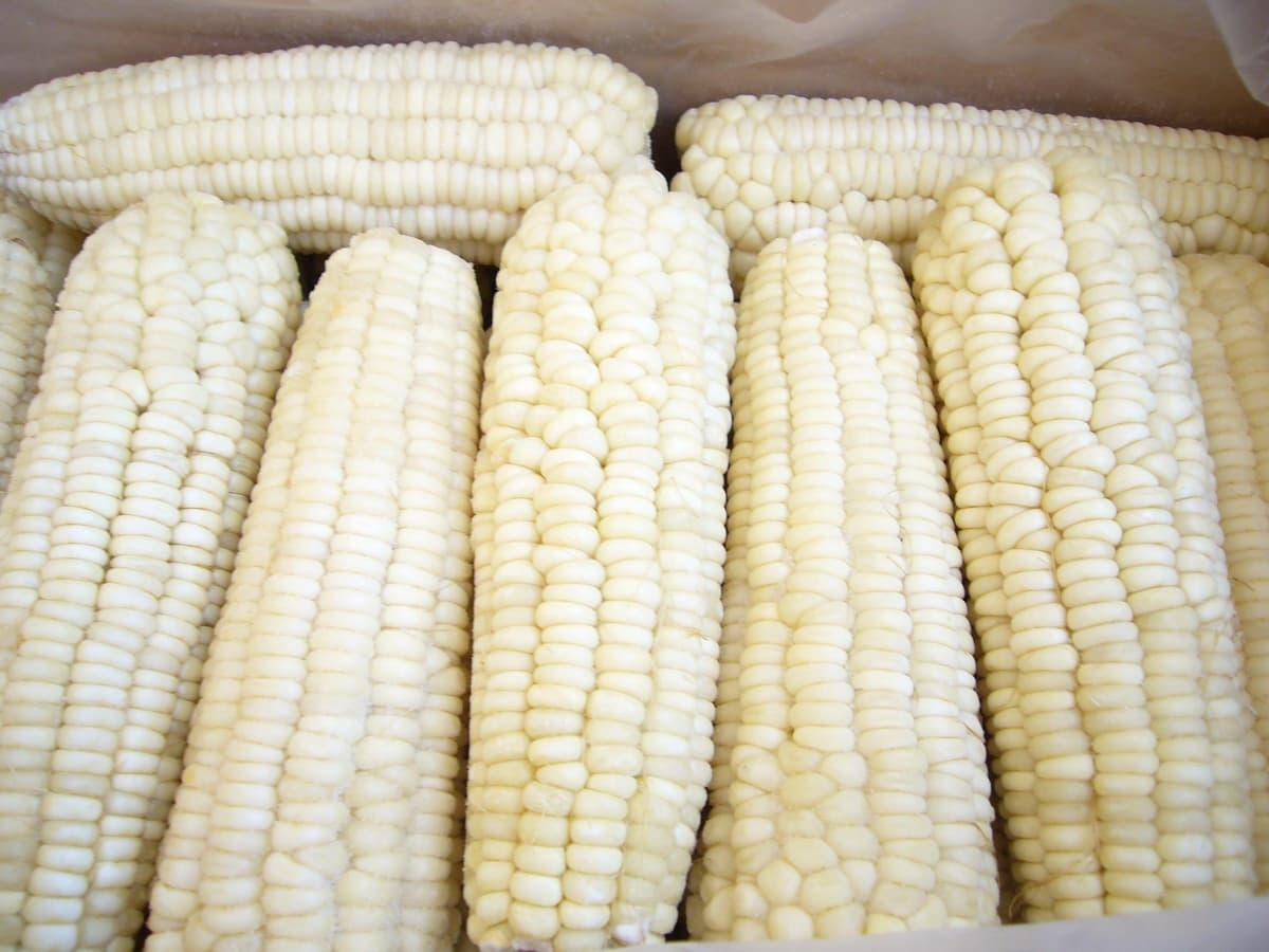 frozen waxy corn cob from Handan Zhaohui Biotech Co.,ltd. B2B ...
