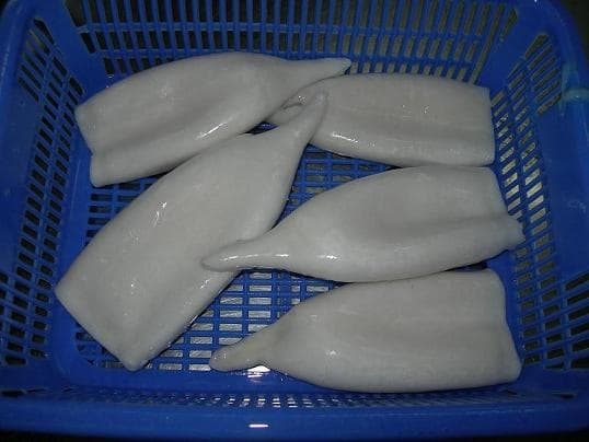 Sell Todarodes <strong>Squid</strong> Tube
