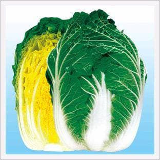 <strong>Chinese</strong> <strong>Cabbage</strong>, Champion Norang