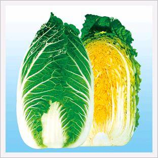 <strong>Chinese</strong> <strong>Cabbage</strong>, CR Manjok