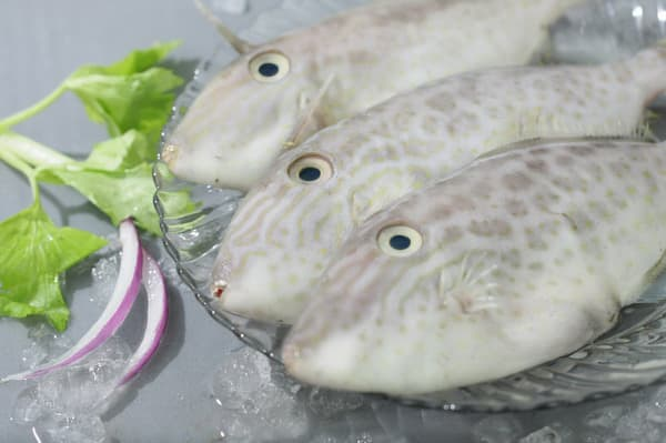 Leather jacket yellowfin filefish from seaway seafood co for Leather jacket fish